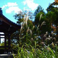 11月3日 この日鷹ヶ峰源光庵の主役は紅葉でもなく、悟りの窓でもなく ススキだった!
