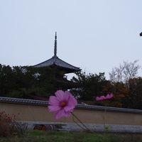 秋うらら。奈良の自然を大満喫 ~3日目・法隆寺までサイクリング~