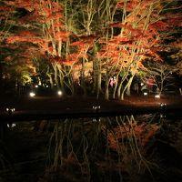 曾木公園もみじまつり 紅葉ライトアップを家族にせがまれて。