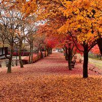 2015年秋 山中湖ロッジ滞在記(5)富士吉田の古民家落ちモミジ回廊
