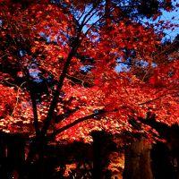 紅葉の長瀞を歩く日帰り旅【後編】~月の石もみじ公園・自然の博物館 紅葉まつり編~
