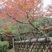 京都鷹峯の秋 2015