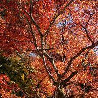 201411関西旅行 2日目【京都(鞍馬,比叡山)、滋賀(琵琶湖)】