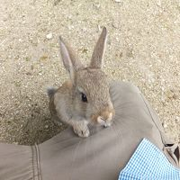 2015 平日広島アウェイ観戦とウサギの島散策【その6】うさぎ島でうさぎと戯れ(その3)