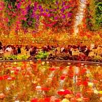 なばなの里2/6 花の女王 球根ベコニア5,000鉢も ☆大温室のベコニアガーデン