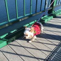 冬の日帰り那須高原 犬のお散歩は楽し寒し。