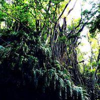 沖縄の城(グスク)と自然に触れる旅 〜2015・パワーチャージの旅〜