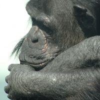 【広島市・安佐北区】 安佐動物園の生き物を表情で追ってみた 16年1月11日