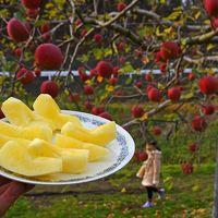 毎年恒例のりんご狩り
