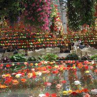同窓会でなばなの里へ・ベゴニアガーデンで花々を楽しむ