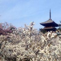 花の都の桜廻り -2015春-