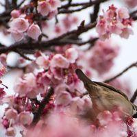 梅と桜が一緒に見れる!1泊2日のATM(熱海)旅行