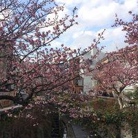 早春の熱海旅(2)ハーブガーデンと起雲閣と川沿いの熱海桜