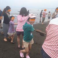 江ノ島で地曳き網