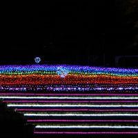 奥河内イルミナージュ(大阪府河内長野市 大阪府立花の文化園):イルミネーションスポット