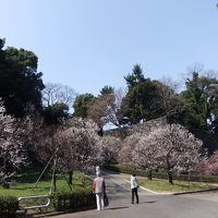 皇居東御苑の梅を求めて