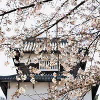福岡城さくらまつり 桜・夜桜 咲き誇る