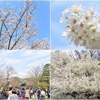 2016春の皇居乾通り一般公開と東御苑の桜
