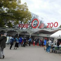 神戸・王子動物園のお花見