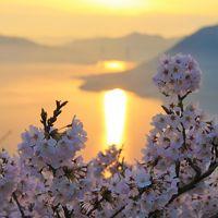 絶景!積善山三千本桜
