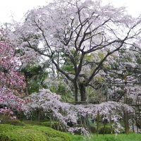 おばちゃん8人、花見旅・・・日曜日&桜は満開なのに空いていました♪