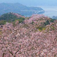 しまなみ海道 桜の名所『開山公園』へ