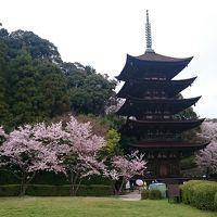 山口3泊4日♪満開の桜の名所ツアー