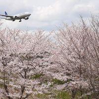 【千葉:成田空港】 空港の周囲で桜めぐり