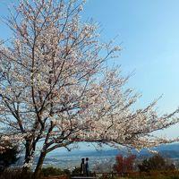 徳島市一の絶景・白鵬ゆかりの眉山と徳島城跡の桜