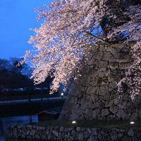 桜・桜・桜(滋賀編)