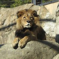 あまった1枚でおまけの旅≪日本平動物園≫