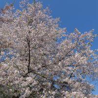 春の息吹を感じる季節の山形を訪れました!!