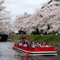 富山に白えびを食べに行く2-富山地鉄ホテル,路面電車半額利用券,松川公園の桜,市役所展望台