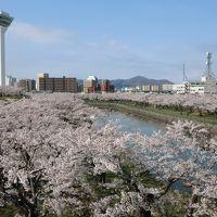 桜と新幹線は北の大地へ 〜北海道新幹線と花見の旅〜 【函館】