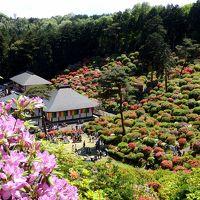 圧巻の塩船観音つつじまつりと ちょこっと昭和記念公園
