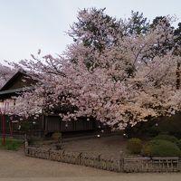 桜追いかけて津軽〜三内丸山遺跡と弘前さくらまつり〜�