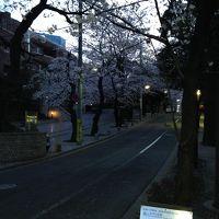品川近隣の桜の穴場巡り