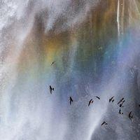 初夏の日光路(2) 虹の中でイワツバメが群舞する華厳の滝&新緑に染まるいろは坂