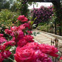 大阪南部をブラブラ・・・ バラが満開の「花の文化園」〜千早の森の古民家カフェへ♪