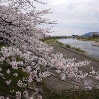 角館と大仙市に行ってきた〜桜・さくら・サクラ