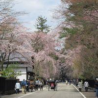 桜には少し早かった・・・春の角館を町歩き