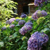 初夏の松江に行ってミタ!「八重垣神社と紫陽花の月照寺」