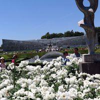 神代植物公園4/6 バラ園b 春のバラフェスタ ☆多彩に409品種・5,200株も