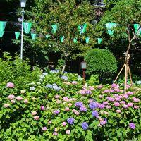 白山神社〜小石川植物園