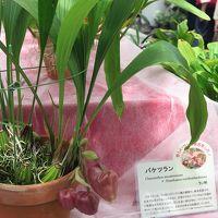 神代植物公園6/6 ラン・ベゴニア 特設温室 ☆多種多彩に華やいで