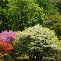 春の日光を楽しむ旅【2】〜ツツジ咲くキスゲ平と大笹牧場〜