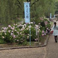 万博公園「音楽の祭日」とあじさいまつり