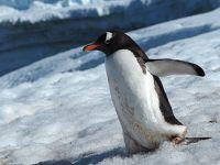 南極半島クルーズ 11日間