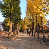 世田谷の紅葉巡り 2013/11/24
