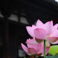 蓮と新緑の奈良、足を延ばして京都・堺をテクテク散歩
